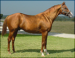 INDY TALENT (TB) owned by Lee Farm - Claremore, OK  2006