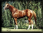 TROUBLED MEMORIES - ApHC Champion Stallion